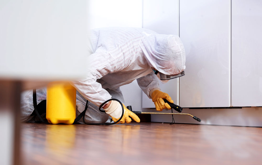 Why hiring Pest control Company for pest removal is beneficial